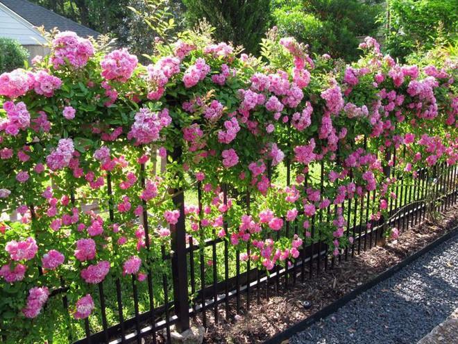Top 5 loài hoa có ý nghĩa vô cùng đẹp và cách trồng cũng vô cùng dễ - Ảnh 2.
