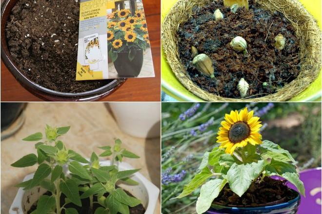Top 5 loài hoa có ý nghĩa vô cùng đẹp và cách trồng cũng vô cùng dễ - Ảnh 3.