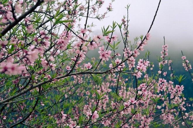 Top 5 loài hoa có ý nghĩa vô cùng đẹp và cách trồng cũng vô cùng dễ - Ảnh 4.