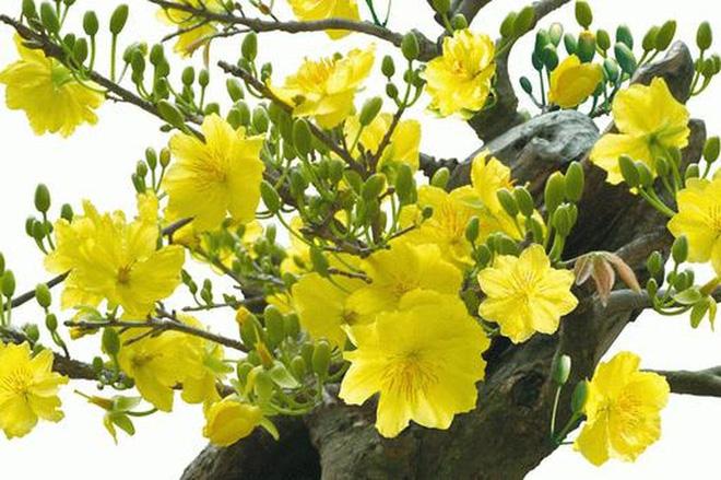 Top 5 loài hoa có ý nghĩa vô cùng đẹp và cách trồng cũng vô cùng dễ - Ảnh 5.