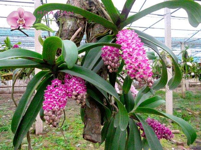 Top 5 loài hoa có ý nghĩa vô cùng đẹp và cách trồng cũng vô cùng dễ - Ảnh 6.