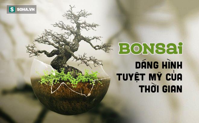 """Tuyệt tác bonsai Nhật giá """"cắt cổ"""" 3,8 tỷ đồng trông như thế nào?"""