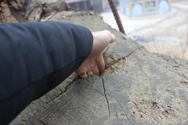 Cận cảnh cây sưa trăm tỷ đang chết dần chết mòn sắp được chặt hạ trước Tết Nguyên đán - Ảnh 9.