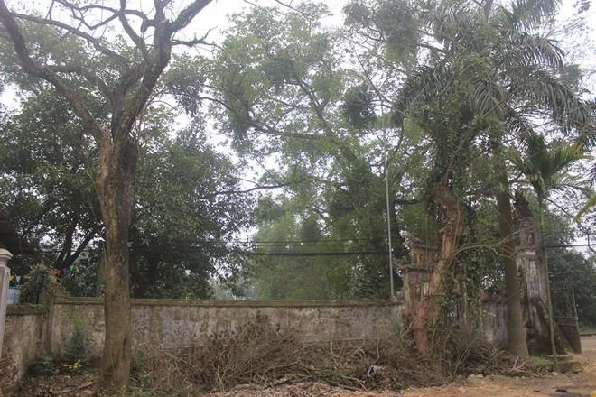 Cận cảnh cây sưa trăm tỷ đang chết dần chết mòn sắp được chặt hạ trước Tết Nguyên đán - Ảnh 11.