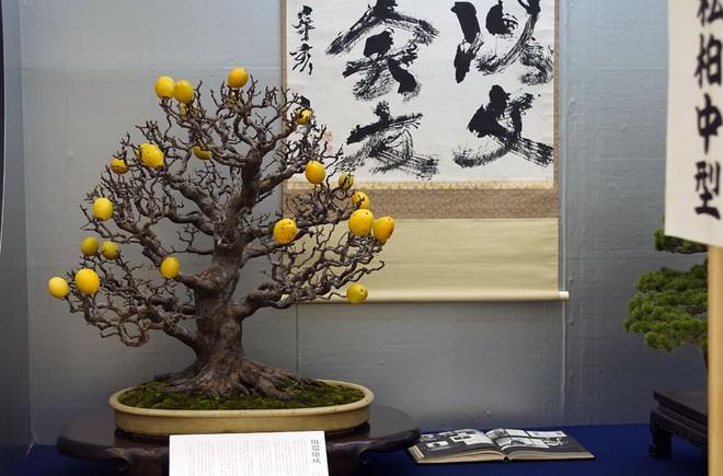 Tuyệt tác bonsai Nhật giá cắt cổ 3,8 tỷ đồng trông như thế nào? - Ảnh 19.