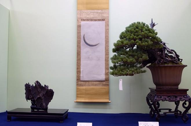 Tuyệt tác bonsai Nhật giá cắt cổ 3,8 tỷ đồng trông như thế nào? - Ảnh 20.