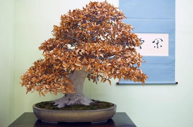 Tuyệt tác bonsai Nhật giá cắt cổ 3,8 tỷ đồng trông như thế nào? - Ảnh 21.