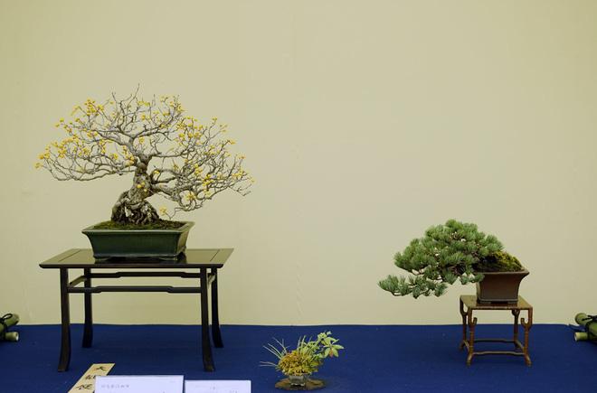 Tuyệt tác bonsai Nhật giá cắt cổ 3,8 tỷ đồng trông như thế nào? - Ảnh 12.