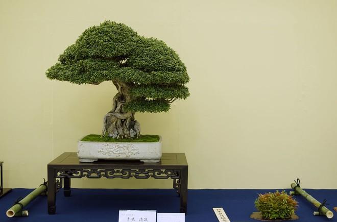 Tuyệt tác bonsai Nhật giá cắt cổ 3,8 tỷ đồng trông như thế nào? - Ảnh 14.