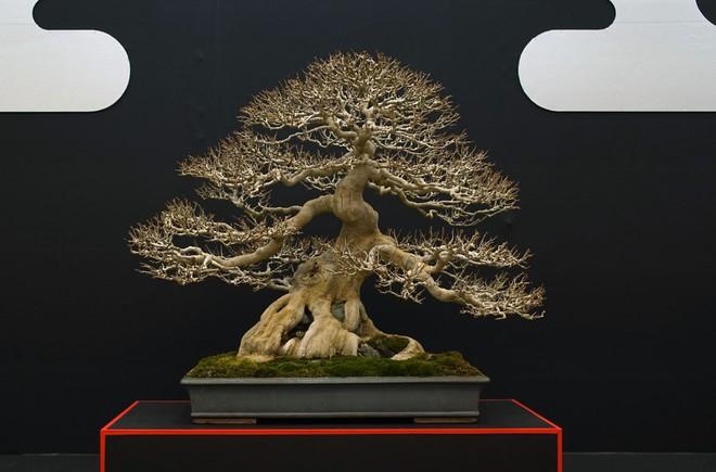 Tuyệt tác bonsai Nhật giá cắt cổ 3,8 tỷ đồng trông như thế nào? - Ảnh 15.
