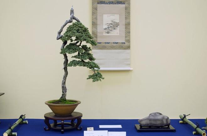 Tuyệt tác bonsai Nhật giá cắt cổ 3,8 tỷ đồng trông như thế nào? - Ảnh 18.