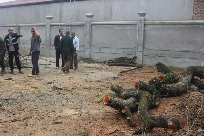 Đang chặt cây sưa trăm tỷ từng gây lùm xùm suốt 8 năm ở Hà Nội - Ảnh 4.