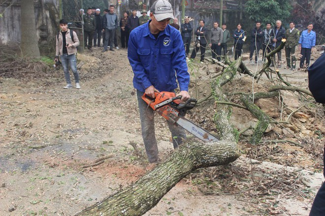 Đang chặt cây sưa trăm tỷ từng gây lùm xùm suốt 8 năm ở Hà Nội - Ảnh 5.