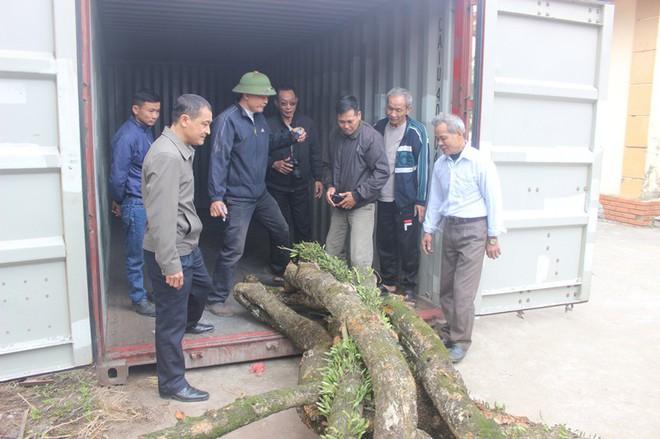 Đang chặt cây sưa trăm tỷ từng gây lùm xùm suốt 8 năm ở Hà Nội - Ảnh 12.