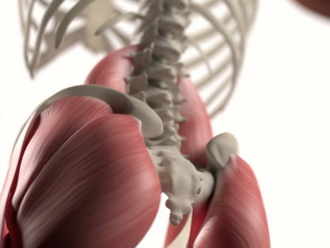 9 bộ phận cơ thể vô dụng con người bây giờ không cần đến nữa - Ảnh 6.