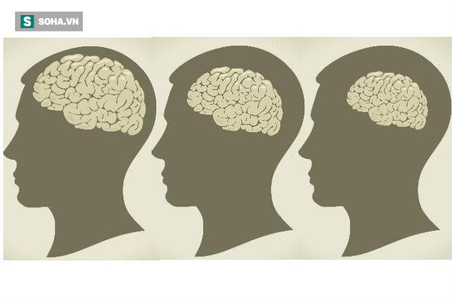 Nghiên cứu cho rằng mỡ càng nhiều, não càng nhỏ: Sự thật là thế nào? - Ảnh 1.