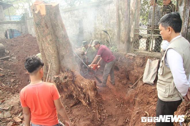 Dân làng mua thùng container 40 triệu đồng, cử 23 người bảo vệ gỗ cây sưa trăm tuổi vừa đốn hạ - Ảnh 1.