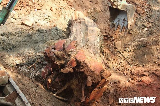 Dân làng mua thùng container 40 triệu đồng, cử 23 người bảo vệ gỗ cây sưa trăm tuổi vừa đốn hạ - Ảnh 3.