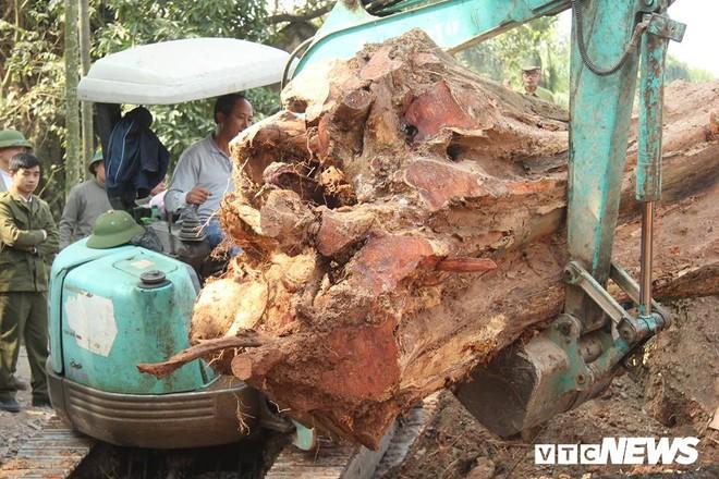 Dân làng mua thùng container 40 triệu đồng, cử 23 người bảo vệ gỗ cây sưa trăm tuổi vừa đốn hạ - Ảnh 4.