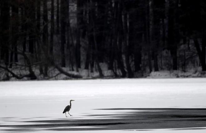 24h qua ảnh: Mặc đồ bơi thi chạy giữa tuyết trắng tại Serbia - Ảnh 11.
