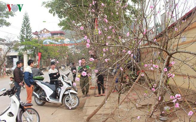 Ảnh: Nhộn nhịp bán mua đào rừng đón Tết ở Sơn La - Ảnh 1.