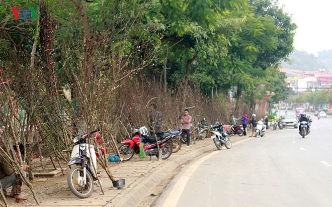 Ảnh: Nhộn nhịp bán mua đào rừng đón Tết ở Sơn La - Ảnh 2.