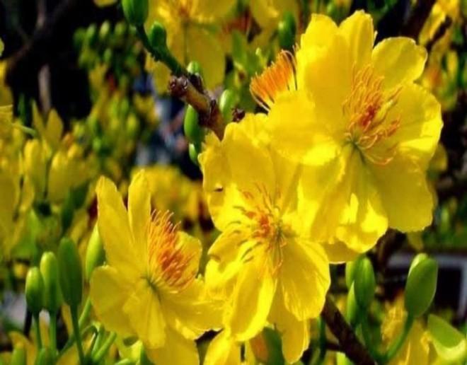 10 loại hoa mang lại may mắn, tài lộc ngày Tết - Ảnh 1.