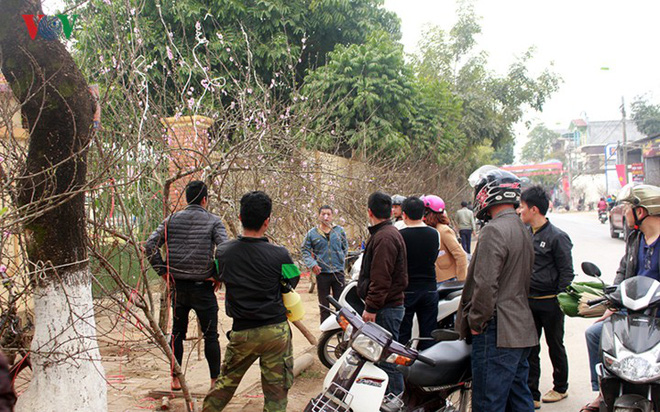 Ảnh: Nhộn nhịp bán mua đào rừng đón Tết ở Sơn La - Ảnh 11.