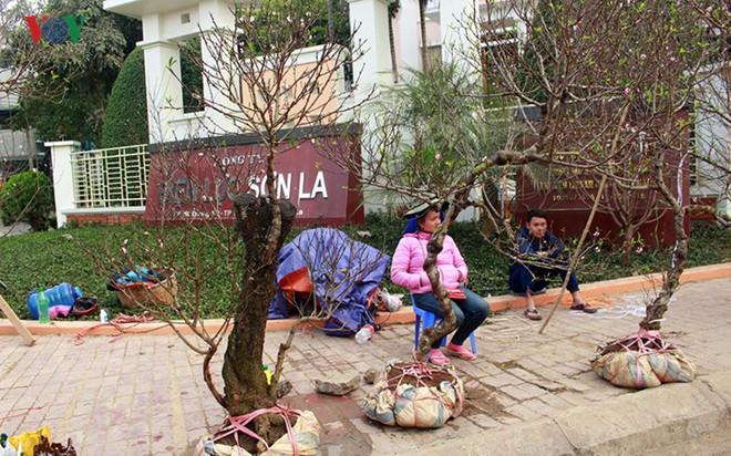Ảnh: Nhộn nhịp bán mua đào rừng đón Tết ở Sơn La - Ảnh 17.