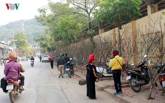 Ảnh: Nhộn nhịp bán mua đào rừng đón Tết ở Sơn La - Ảnh 4.