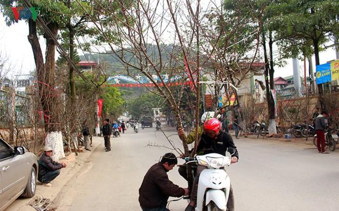 Ảnh: Nhộn nhịp bán mua đào rừng đón Tết ở Sơn La - Ảnh 5.