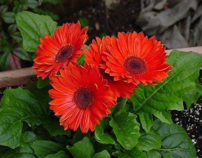 10 loại hoa mang lại may mắn, tài lộc ngày Tết - Ảnh 5.