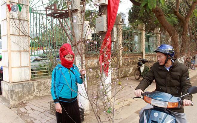 Ảnh: Nhộn nhịp bán mua đào rừng đón Tết ở Sơn La - Ảnh 10.