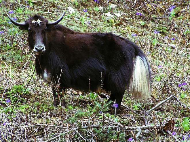 """Những """"hoàng tử lai"""" đẹp đến ngỡ ngàng trong thế giới động vật - Ảnh 15."""