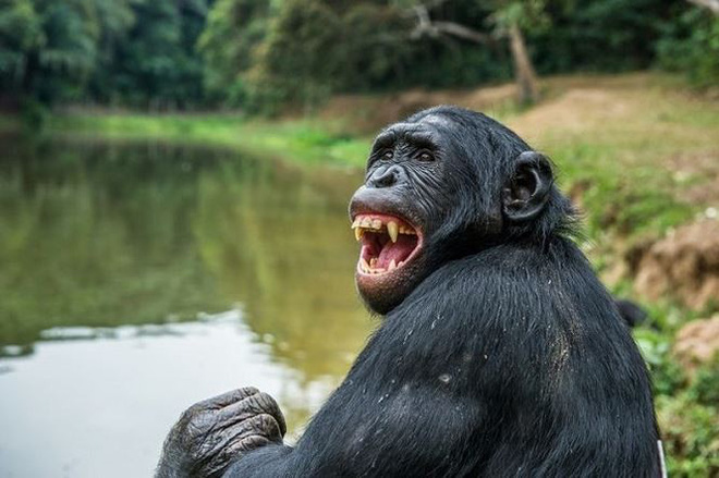 Những loài động vật lãng mạn nhất thế giới (Phần 2) - Ảnh 1.