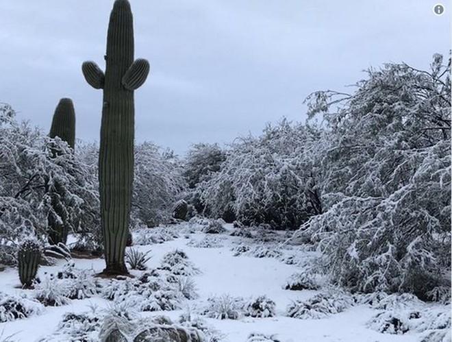 Tuyết rơi trắng sa mạc tại Mỹ - Ảnh 1.