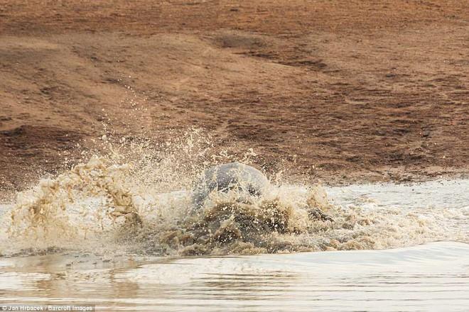 Không ngờ có ngày cá sấu cũng bị kẻ thù tấn công, phải vắt chân lên cổ mà chạy - Ảnh 8.