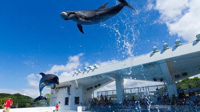 Quần đảo tựa như Hạ Long thu nhỏ tại Nhật Bản và bản giao hưởng của loài sứa - Ảnh 8.
