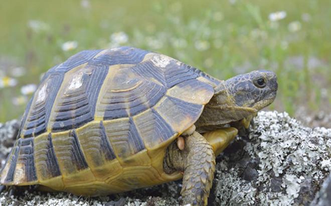 Bị đâm thẳng vào mai, con Rùa mới thấu hiểu 1 điều mà ai cũng mắc phải 1 lần trong đời