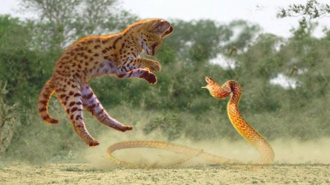 Linh miêu điềm tĩnh tung cước, rắn độc bị vả thẳng mặt mà không thể phản kháng - Ảnh 1.