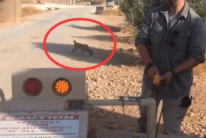 TQ mỉa mai đặc nhiệm Mỹ ở miền bắc Syria: Đến chó cưng họ còn bỏ rơi? - ảnh 2
