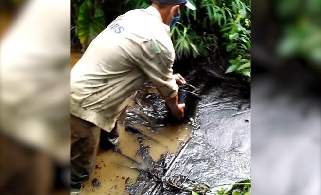 Toàn cảnh vụ đổ trộm dầu thải khiến người dân lao đao khát nước sạch - Ảnh 2.