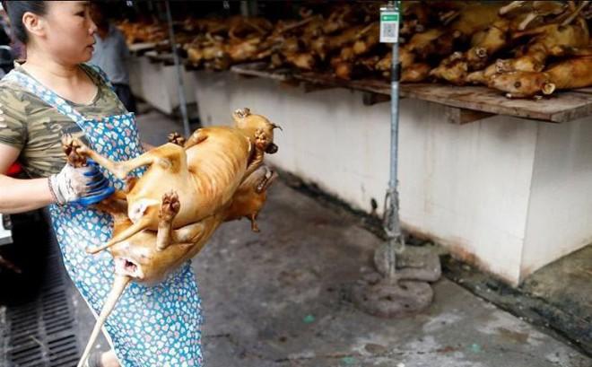 Trung Quốc: Thịt lợn thiếu lại đắt, thịt chó lên ngôi