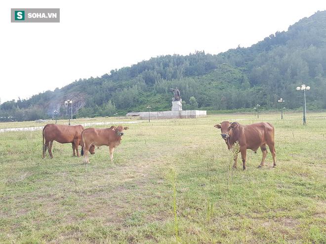 Hà Tĩnh: Quảng trường hàng chục tỷ đồng hoang tàn, thành khu chăn bò cho trẻ nhỏ - Ảnh 16.
