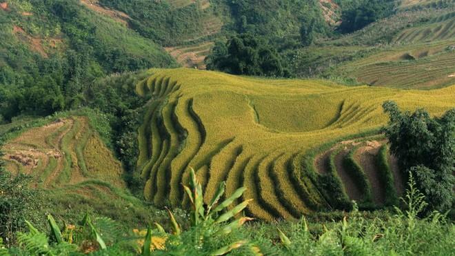 Những địa danh đẹp nhất Việt Nam được truyền thông quốc tế ca ngợi - Ảnh 2.