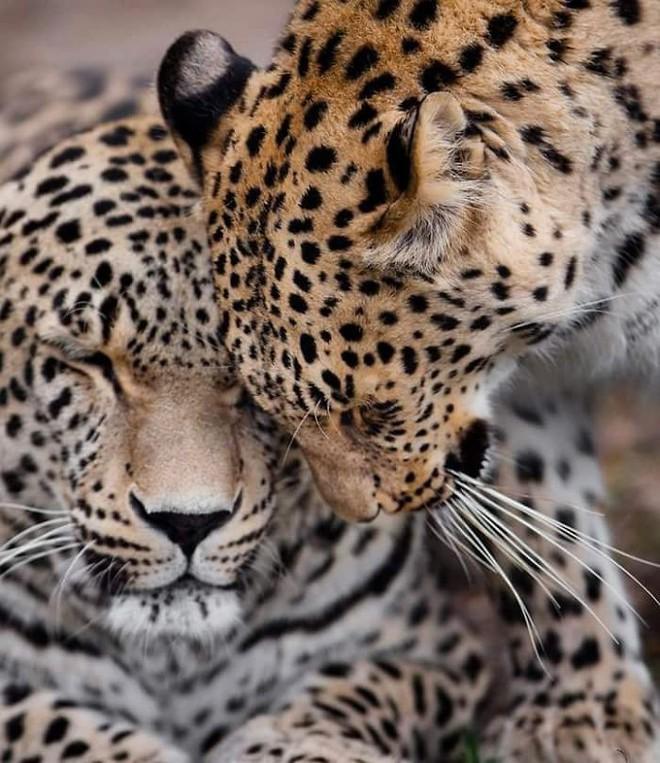 Khoảnh khắc thân mật của các loài động vật khiến chúng ta ghen tỵ - Ảnh 1.