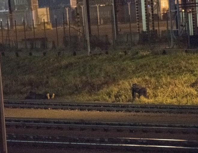 Những người ôm mộng đến Anh đổi đời và cuộc chơi mèo vờn chuột hàng đêm với cảnh sát Bỉ: Túi cạn tiền, thấy chết vẫn không sợ - ảnh 2