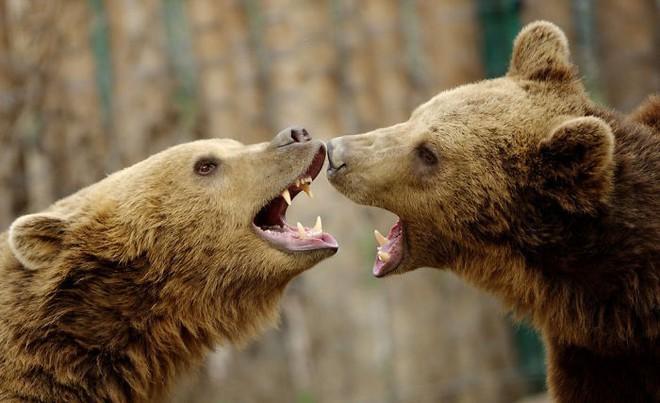 Khoảnh khắc thân mật của các loài động vật khiến chúng ta ghen tỵ - Ảnh 10.