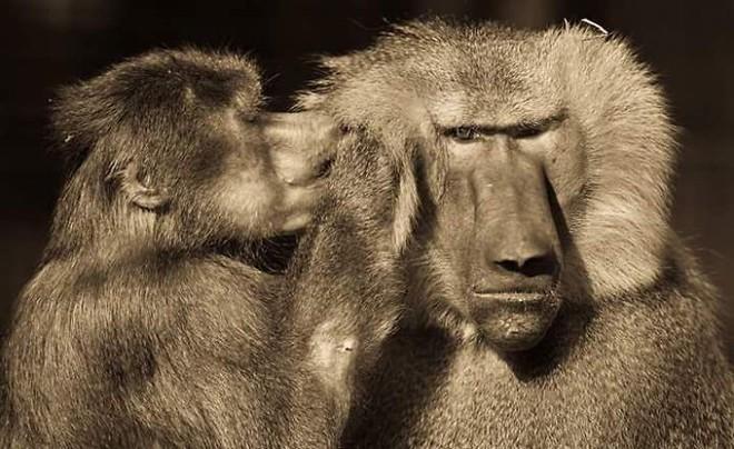 Khoảnh khắc thân mật của các loài động vật khiến chúng ta ghen tỵ - Ảnh 11.