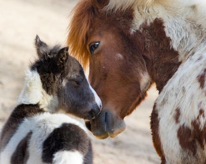 Khoảnh khắc thân mật của các loài động vật khiến chúng ta ghen tỵ - Ảnh 2.